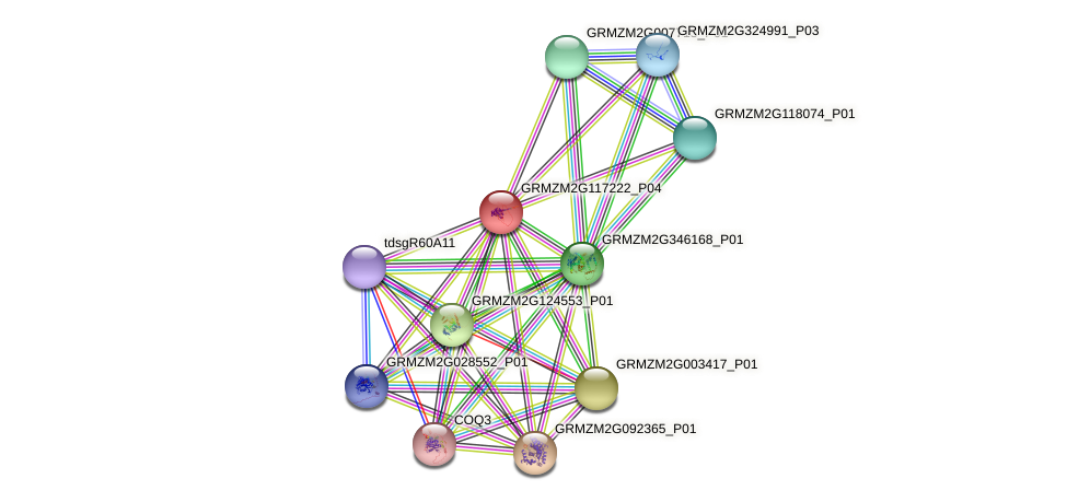 Zm.18527 protein (Zea mays) - STRING interaction network