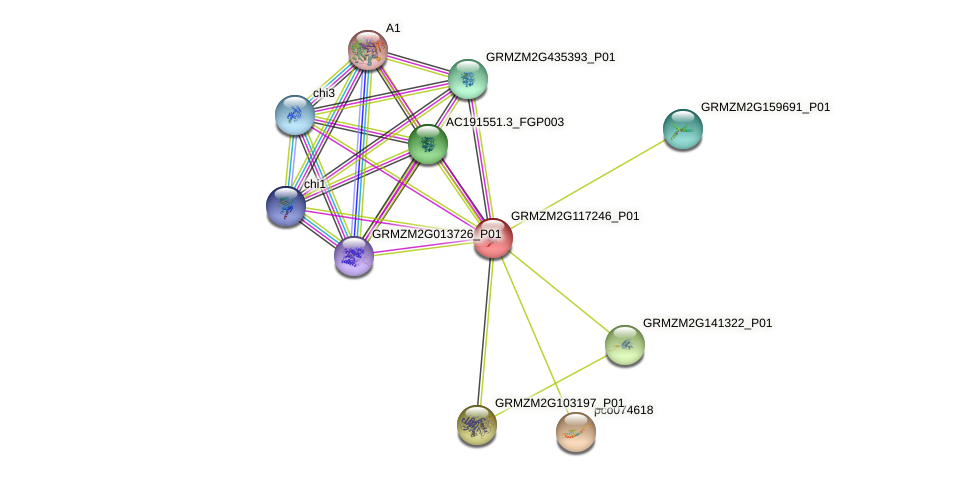 Zm.144645 protein (Zea mays) - STRING interaction network