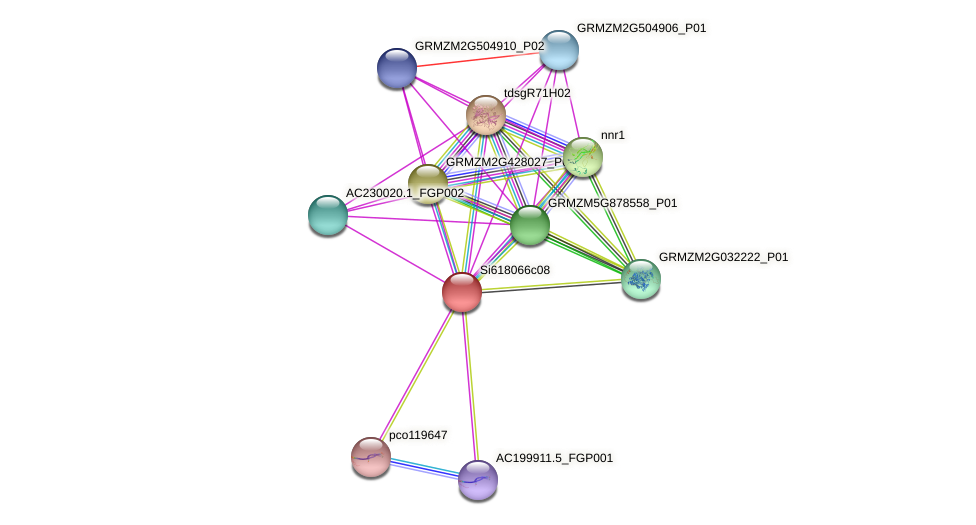 GRMZM2G117369_P03 protein (Zea mays) - STRING interaction network