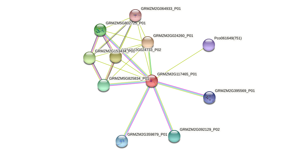 GRMZM2G117465_P01 protein (Zea mays) - STRING interaction network