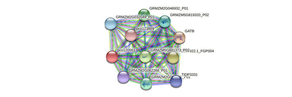 pco120561 protein (Zea mays) - STRING interaction network