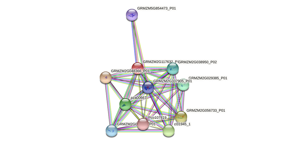 GRMZM2G117632_P01 protein (Zea mays) - STRING interaction network