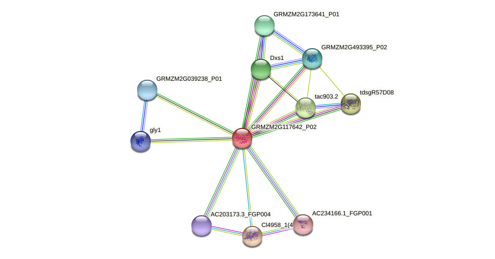 GRMZM2G117642_P02 protein (Zea mays) - STRING interaction network