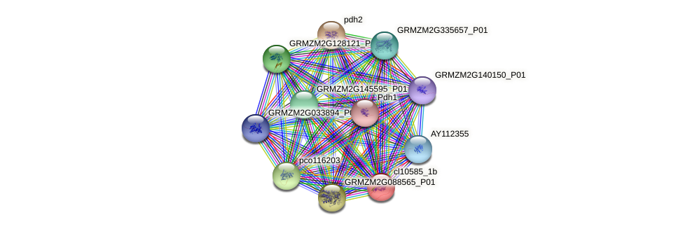 cl10585_1b protein (Zea mays) - STRING interaction network