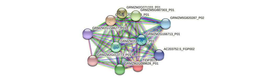TIDP3513 protein (Zea mays) - STRING interaction network