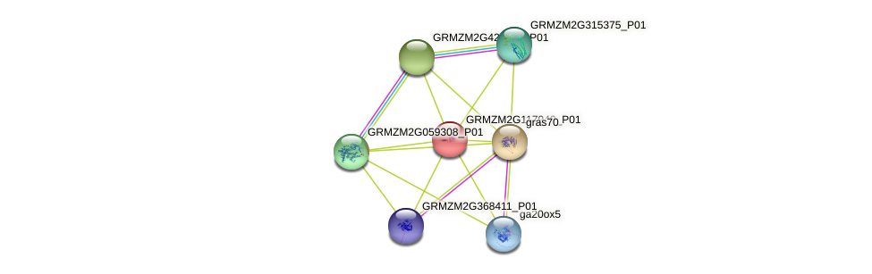 GRMZM2G117940_P01 protein (Zea mays) - STRING interaction network