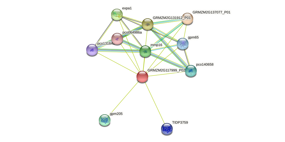 GRMZM2G117999_P02 protein (Zea mays) - STRING interaction network