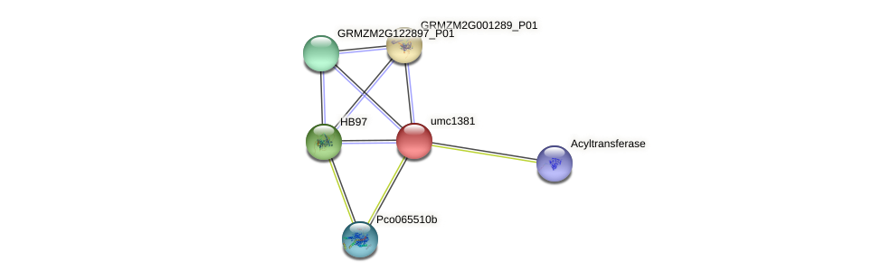 umc1381 protein (Zea mays) - STRING interaction network