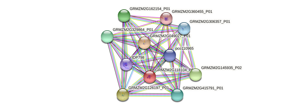 GRMZM2G118104_P01 protein (Zea mays) - STRING interaction network