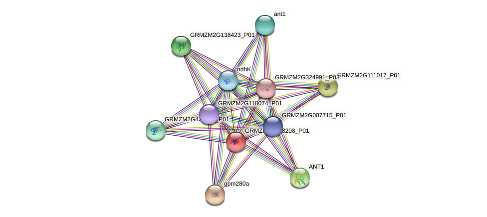 GRMZM2G118208_P01 protein (Zea mays) - STRING interaction network