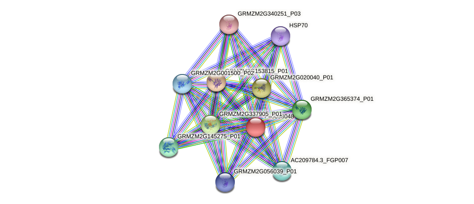 Zm.95995 protein (Zea mays) - STRING interaction network
