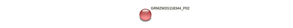 GRMZM2G118344_P02 protein (Zea mays) - STRING interaction network