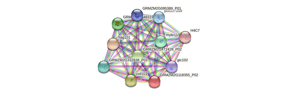 GRMZM2G118355_P02 protein (Zea mays) - STRING interaction network