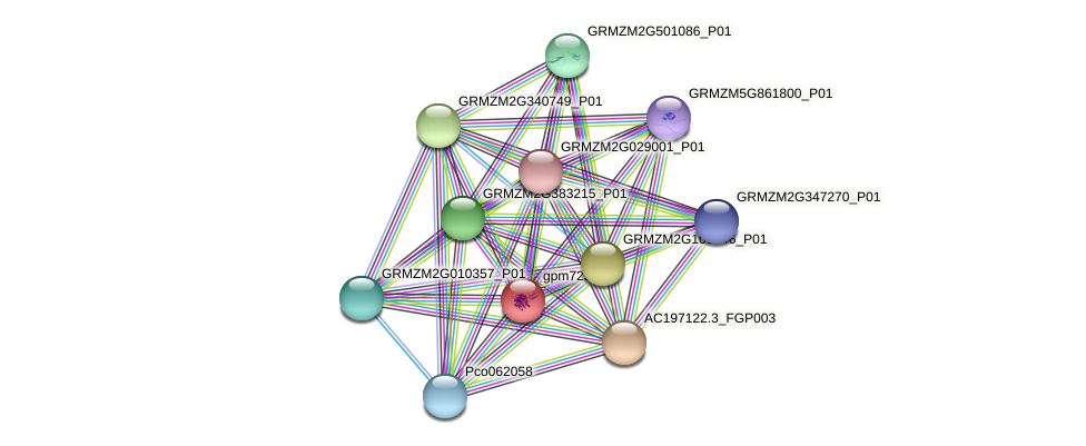 gpm725 protein (Zea mays) - STRING interaction network