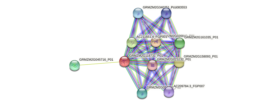 GRMZM2G118731_P01 protein (Zea mays) - STRING interaction network