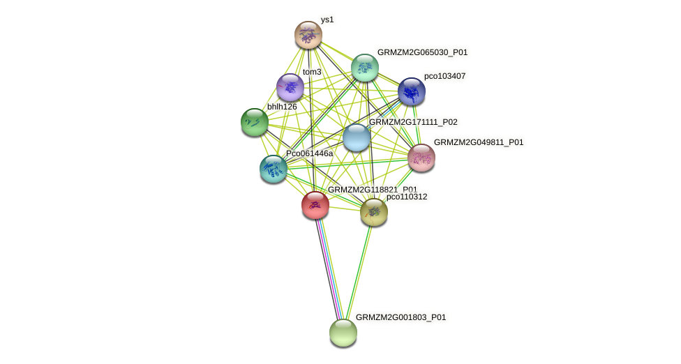 GRMZM2G118821_P01 protein (Zea mays) - STRING interaction network