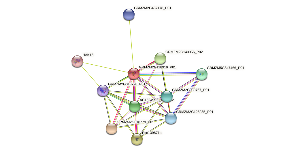 GRMZM2G118919_P01 protein (Zea mays) - STRING interaction network