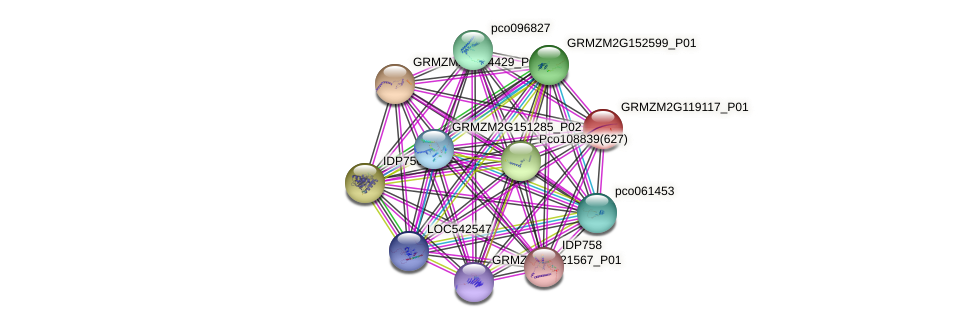 107305673 protein (Zea mays) - STRING interaction network