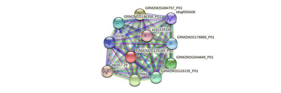GRMZM2G119169_P01 protein (Zea mays) - STRING interaction network