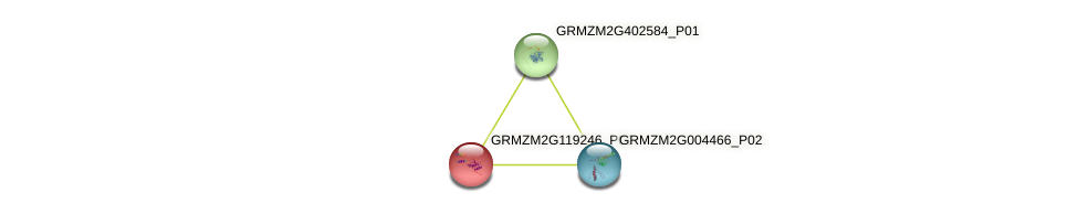 GRMZM2G119246_P01 protein (Zea mays) - STRING interaction network