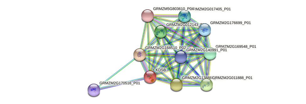 cks protein (Zea mays) - STRING interaction network