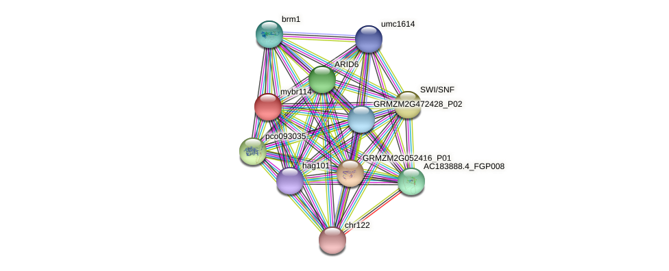 mybr114 protein (Zea mays) - STRING interaction network