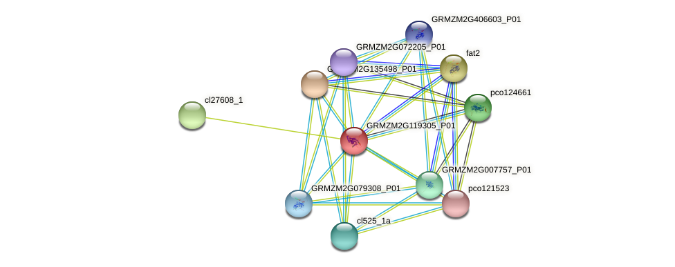 GRMZM2G119305_P01 protein (Zea mays) - STRING interaction network