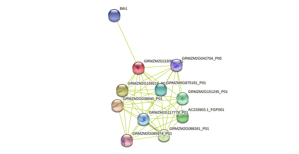 GRMZM2G119383_P01 protein (Zea mays) - STRING interaction network