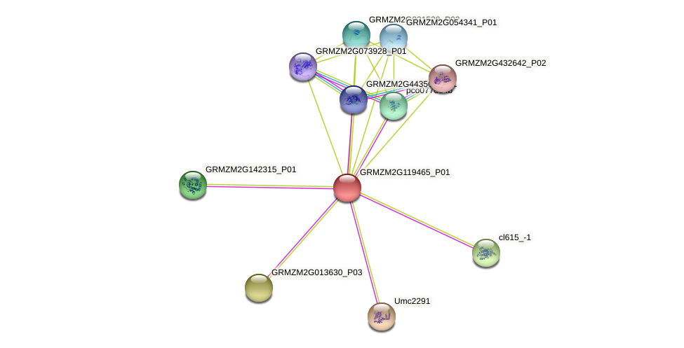 GRMZM2G119465_P01 protein (Zea mays) - STRING interaction network