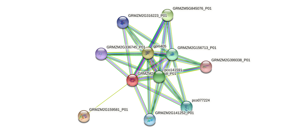 GRMZM2G119468_P01 protein (Zea mays) - STRING interaction network