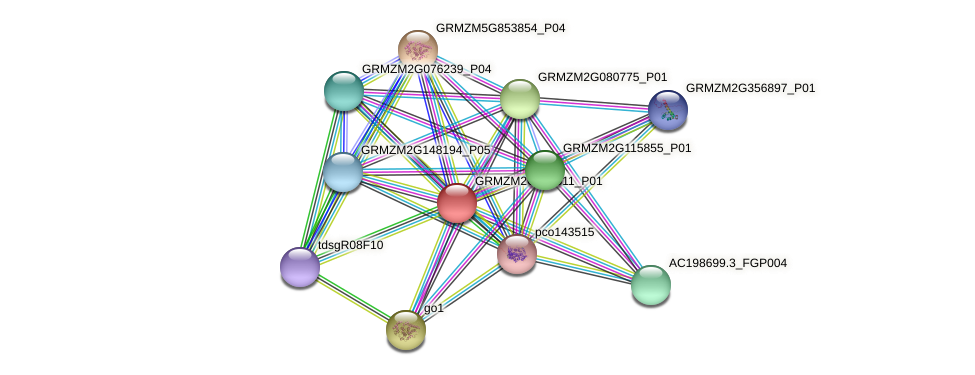 GRMZM2G119511_P01 protein (Zea mays) - STRING interaction network