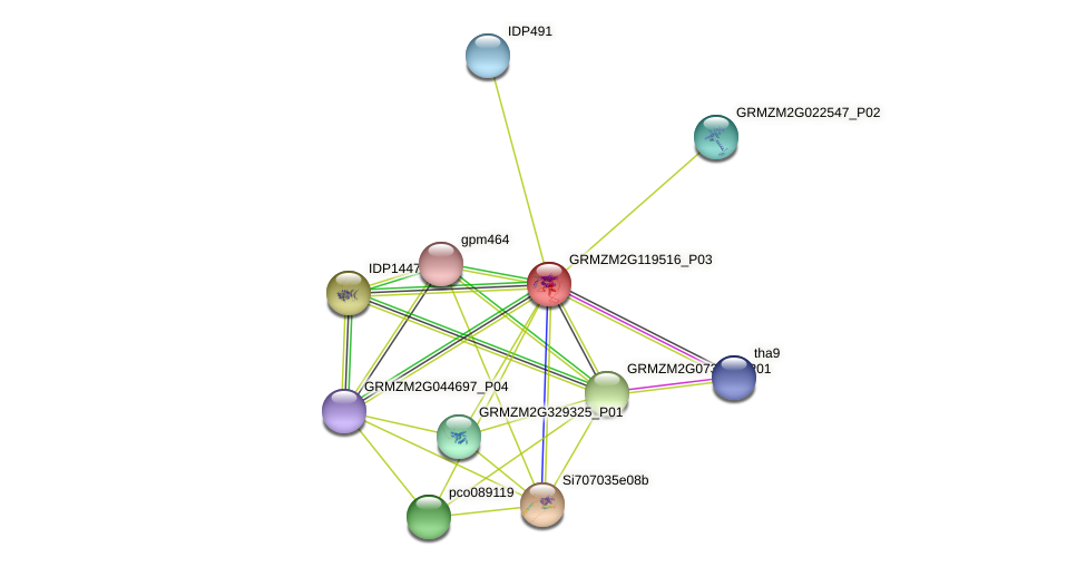 GRMZM2G119516_P01 protein (Zea mays) - STRING interaction network