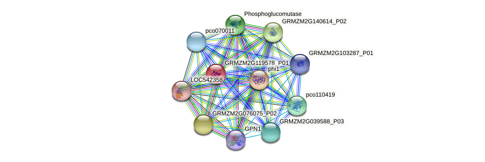 GRMZM2G119578_P01 protein (Zea mays) - STRING interaction network