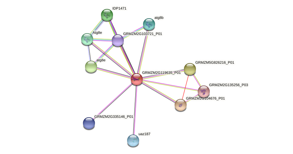 GRMZM2G119635_P01 protein (Zea mays) - STRING interaction network