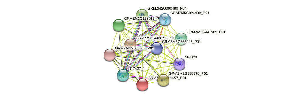 GRMZM2G119657_P01 protein (Zea mays) - STRING interaction network