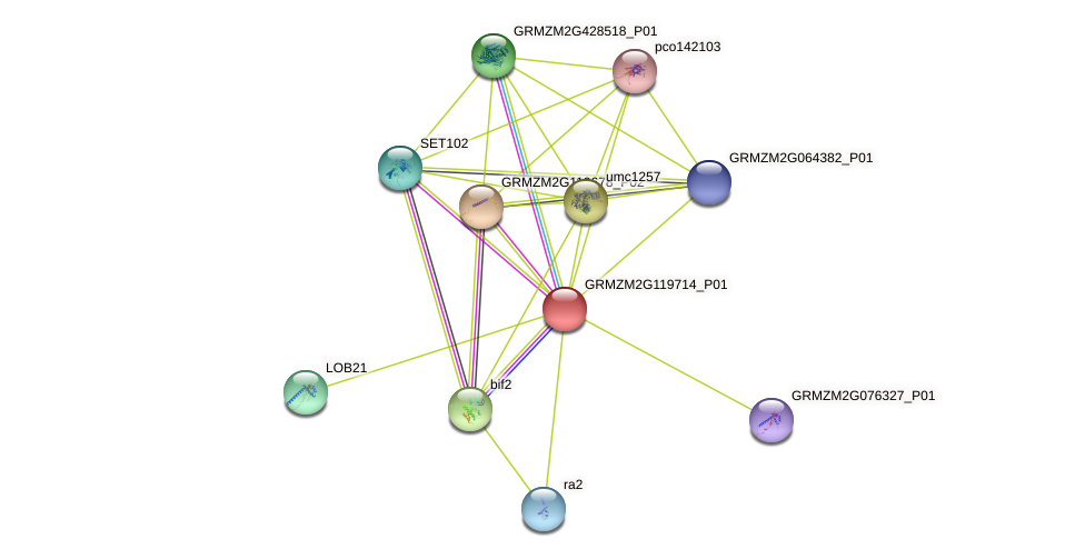 GRMZM2G119714_P01 protein (Zea mays) - STRING interaction network
