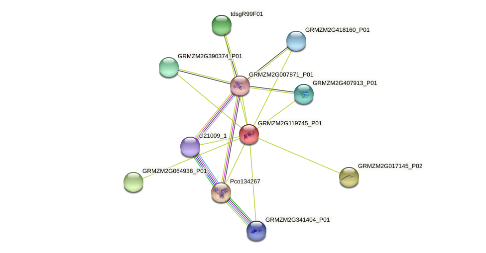 GRMZM2G119745_P01 protein (Zea mays) - STRING interaction network