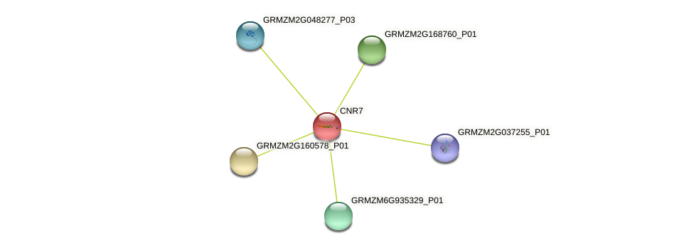 CNR7 protein (Zea mays) - STRING interaction network