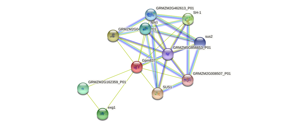 incw4 protein (Zea mays) - STRING interaction network