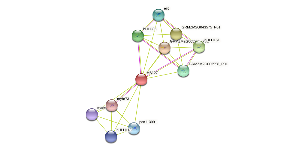 HB127 protein (Zea mays) - STRING interaction network