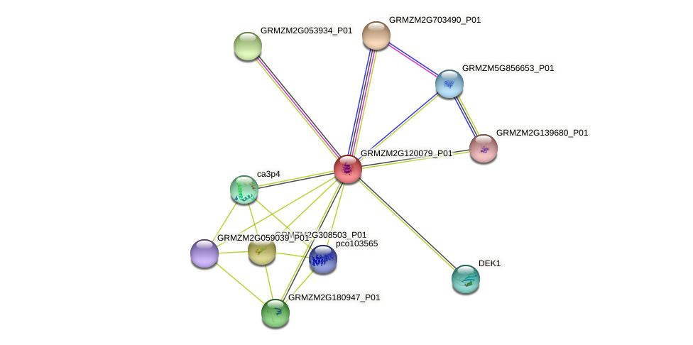 GRMZM2G120079_P01 protein (Zea mays) - STRING interaction network