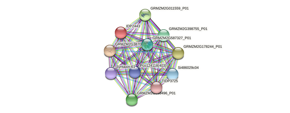IDP2443 protein (Zea mays) - STRING interaction network