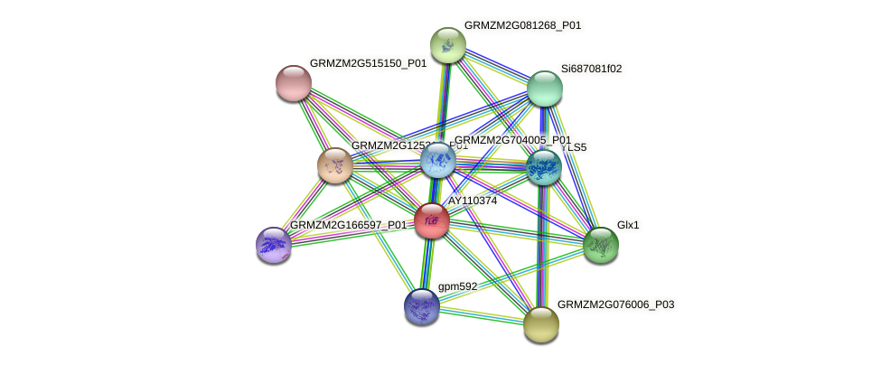 AY110374 protein (Zea mays) - STRING interaction network