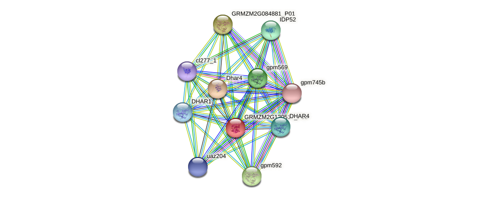 GRMZM2G120517_P02 protein (Zea mays) - STRING interaction network