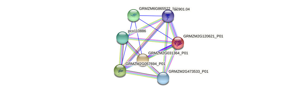 GRMZM2G120621_P01 protein (Zea mays) - STRING interaction network