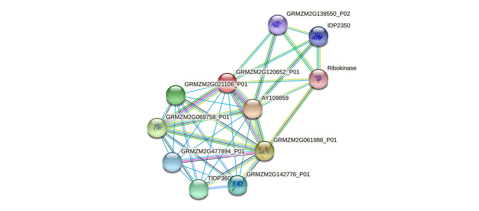 GRMZM2G120652_P01 protein (Zea mays) - STRING interaction network