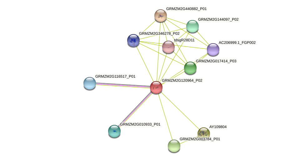 GRMZM2G120964_P02 protein (Zea mays) - STRING interaction network