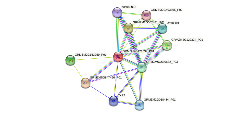 GRMZM2G121034_P01 protein (Zea mays) - STRING interaction network