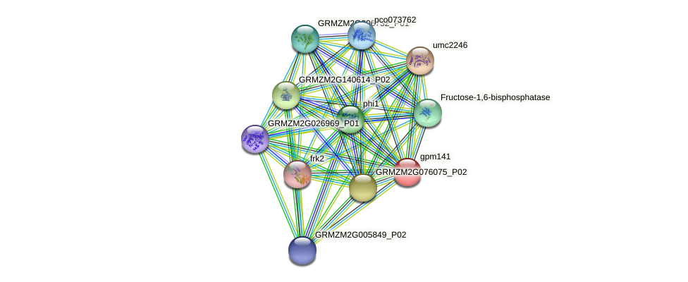 gpm141 protein (Zea mays) - STRING interaction network