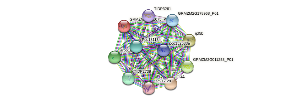 GRMZM2G121075_P01 protein (Zea mays) - STRING interaction network
